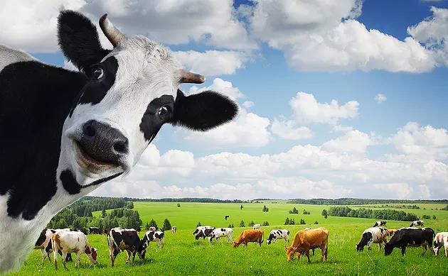 Housing for Livestock